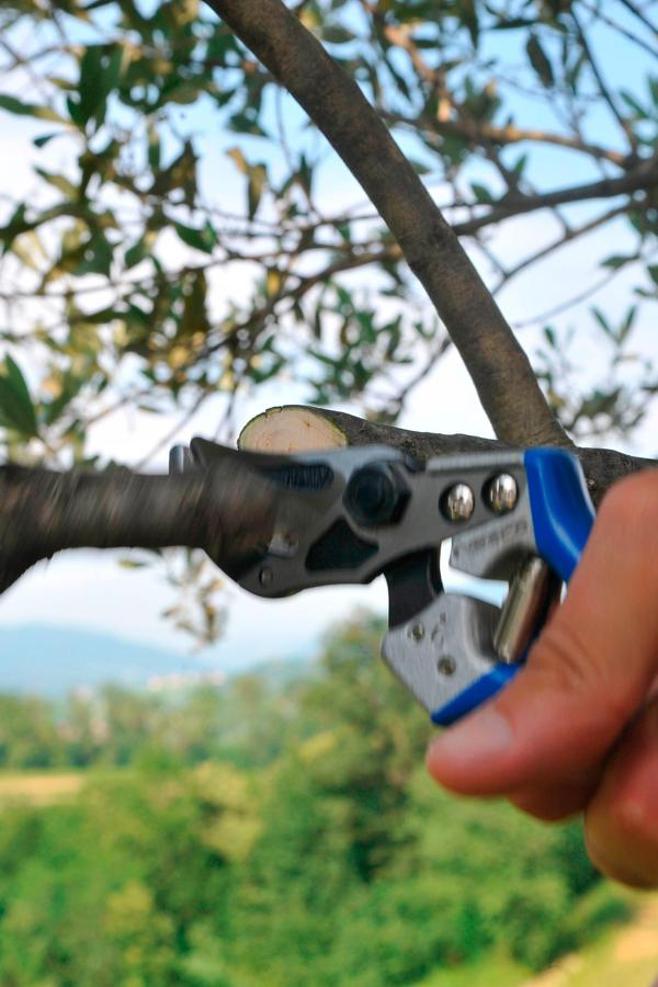 A6 - Curved anvil pruning shears with slicing cut